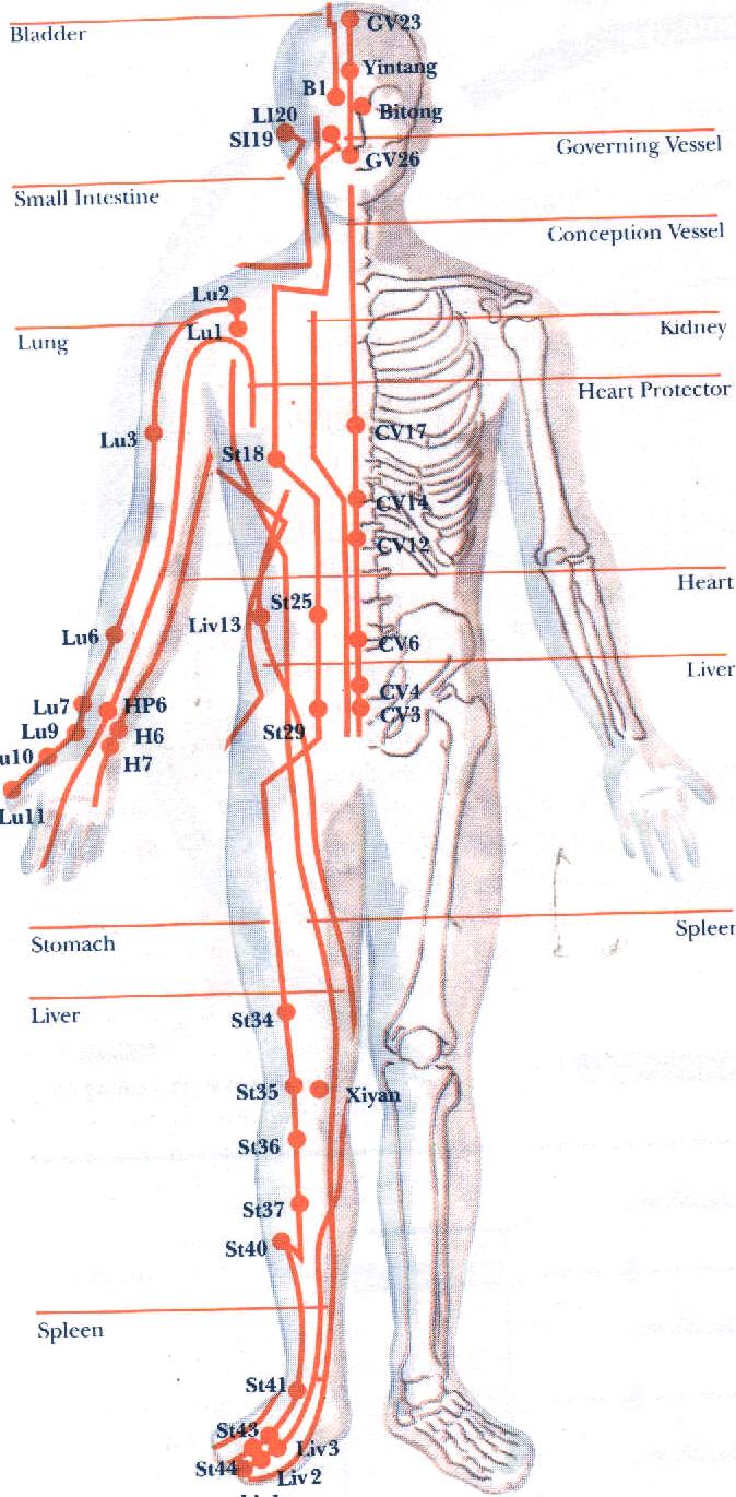 breathing and Qi flow in meridians - Los Angeles Tai Chi